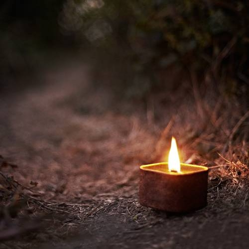 Dusty Trail - Cactus Flower Sage | Wild Well Supply Candles