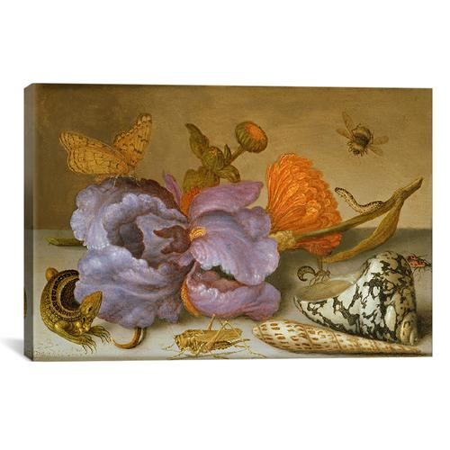 Still life depicting flowers, shells and insects